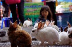 conejos Imagenes de archivo