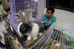 conejos fotografía de archivo libre de regalías