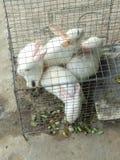 conejos fotografía de archivo