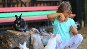 Conejos de alimentación de la muchacha linda del niño de las manos almacen de metraje de vídeo