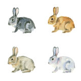 Conejos de la acuarela en el fondo blanco Imagenes de archivo
