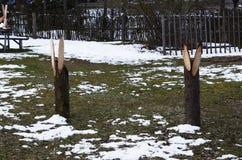 Conejos de madera, Lituania, Rumsiskes Fotografía de archivo