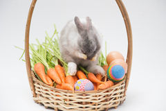 Conejos del bebé con el huevo y las mini zanahorias fotografía de archivo libre de regalías