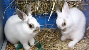 Conejos divertidos almacen de metraje de vídeo