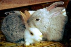 Conejos el dormir Fotografía de archivo libre de regalías