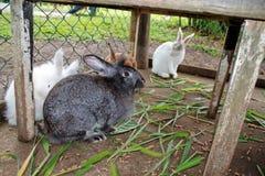 Conejos en jaula Fotos de archivo