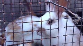 Conejos en la granja almacen de metraje de vídeo
