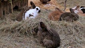 Conejos en la paja almacen de metraje de vídeo