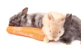 Conejos en un fondo blanco, conejos lindos en un fondo blanco, conejo almacen de video