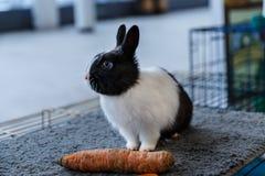 Conejos grandes y pequeños Imágenes de archivo libres de regalías