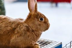 Conejos grandes y pequeños Imagen de archivo libre de regalías