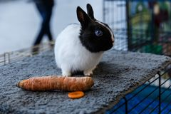 Conejos grandes y pequeños Fotografía de archivo libre de regalías