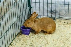 Conejos grandes y pequeños Fotos de archivo