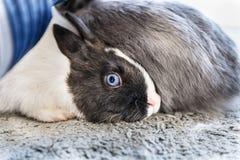 Conejos grandes y pequeños Imagenes de archivo