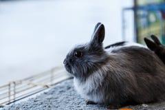 Conejos grandes y pequeños Foto de archivo libre de regalías