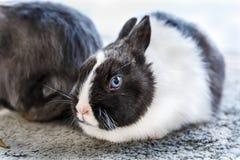 Conejos grandes y pequeños Fotos de archivo libres de regalías