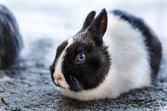 Conejos grandes y pequeños Foto de archivo