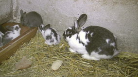 Conejos jovenes almacen de video