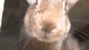 Conejos jovenes en un aparador almacen de metraje de vídeo