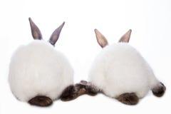 Conejos lindos Imágenes de archivo libres de regalías