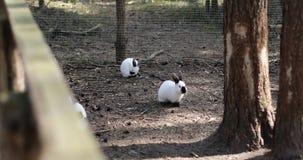 Conejos lindos que corren en el bosque almacen de metraje de vídeo