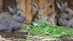 Conejos que se sientan en jaula y que comen la hierba fresca almacen de video