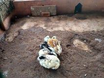 Conejos que se sientan junto Imagen de archivo