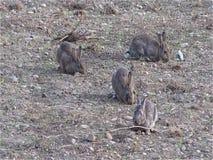 Conejos salvajes almacen de metraje de vídeo