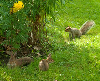 Conejos y ardilla Foto de archivo