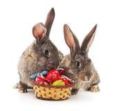 Conejos y cesta de pascua Imágenes de archivo libres de regalías