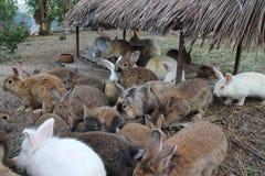Conejos y la cuadrilla fotografía de archivo libre de regalías