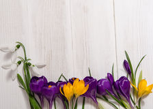 Free Coner From Crocus And Snowdrops Stock Images - 70496474