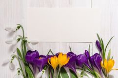 Free Coner From Crocus And Snowdrops On Wooden Background With Empty Royalty Free Stock Photography - 80229097