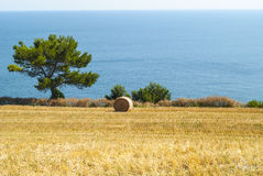 Conero - Cultivated coast Stock Photo