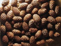 Cones. A lot of pine cones on a bed of slate Stock Images