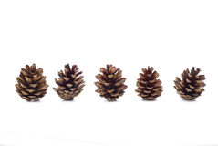 Cones. Several pine cones on the white background - isolated Stock Images