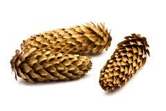 Cones Stock Images