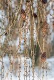 cones Imagem de Stock