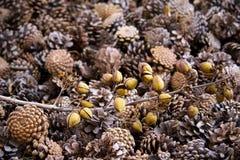 cones Imagens de Stock