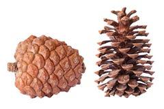 cones fotografia de stock