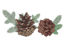 Cones And Spruce Branches Royalty Free Stock Photo