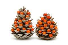 Cones and ashberry Royalty Free Stock Photos