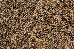 Cones background. Lots of pine cones background Royalty Free Stock Photo