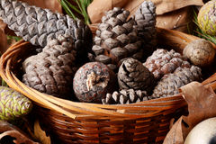 Cones and baskets Royalty Free Stock Photos