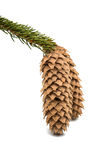 Cones Christmas tree Royalty Free Stock Photo