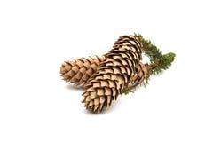 Cones Christmas tree Stock Photos
