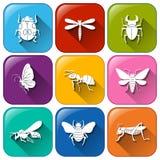 Ícones com insetos Imagens de Stock