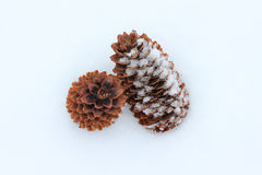 Cones das coníferas no close up da neve Foto de Stock Royalty Free
