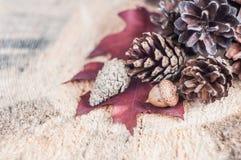 Cones de abeto em uma placa de madeira com folhas Imagens de Stock