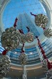 Cones de flutuação do pinho Fotografia de Stock Royalty Free
